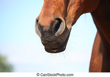Close up of brown horse nose and head