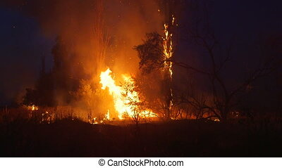 Firefighter fighting with bush fire at night