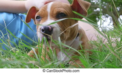 Child with a puppy lying on grass in the garden - Child with...