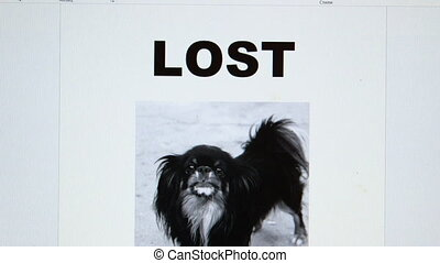 Missing pet poster with text Lost Dog and offering reward
