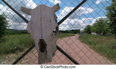 Dolly: Warning sign on private wire fencing gate - Cow skull...