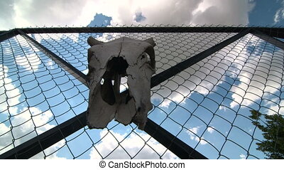 Dolly: Chain link wire privacy fencing with cow skull