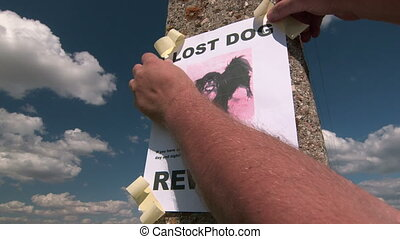 Lost pet sign posting with dog image on a pole