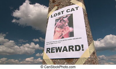 Missing pet poster with text Lost Cat on pole against the...