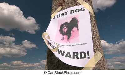 Lost pet sign with dog image on pole against the sky