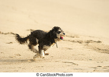 Cute puppy dog running. - A cute dog is running and playing...