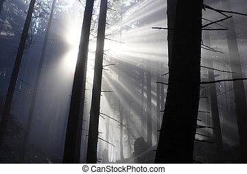 sun beam - Morning sun beams in the autumn park