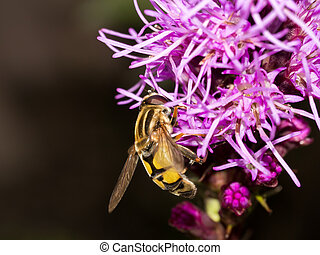 Wasp on Side of Pink Flower - These flowers are always...