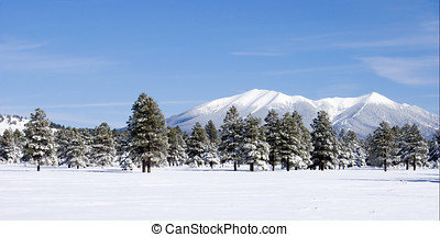 Snow Covered San Francisco Peaks - San Francisco Peaks in...