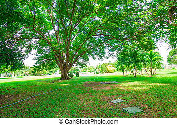 Lawn in a botanical garden and pathway with an old tree