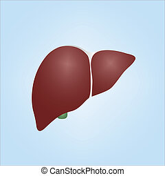 Illustration of a human liver - Realistic vector...