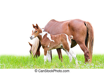 Mare and foal with brown white - Mare and foal with white...