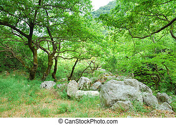 Green grove with old trees and big boulders
