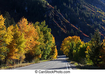 Autumn trees by the highway - Colorful autumn trees in...