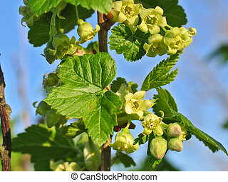 The little flowers of a blackberry - Pretty little flowers...