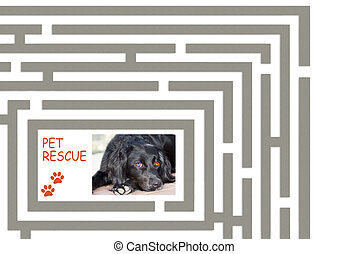 Pet rescue maze 2 - Pet rescue concept, featuring my dog who...