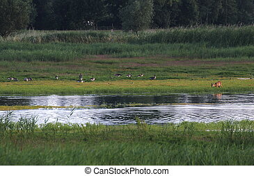Wetland With Geese And Deer