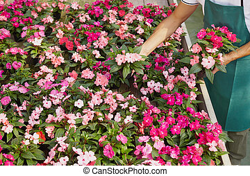 florist - High angle view of florist arranging pink flowers...