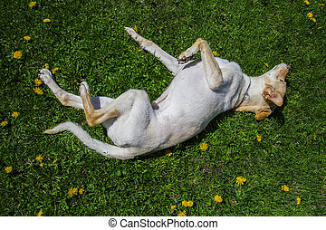 Rolling in the grass