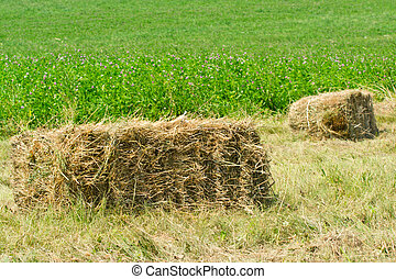 Freshly made from straw bales in a field with green...