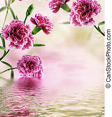 carnation flowers reflected in water