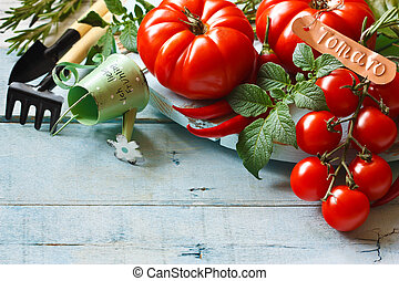 Kitchen garden tomatoes. - Fresh ripe tomatoes and gardening...