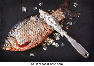 Fresh carp - Fresh carp with fish scaler for removal of fish...