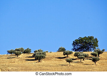 Abruzzo countryside septies - wheat hilly field harvested...
