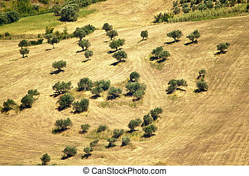 Abruzzo countryside octies - wheat hillside field harvested...