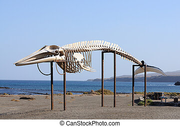 Whale skeleton on Canary Island Fuerteventura, Spain