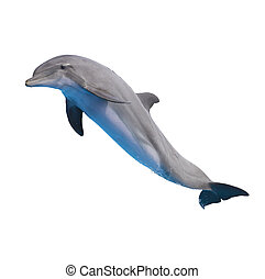 jumping dolphin on white - one jumping dolphin isolated on...