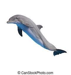 Saltare, delfino, bianco