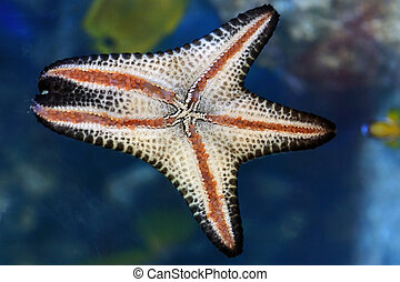 Star Fish - A colorful starfish on a natural back ground
