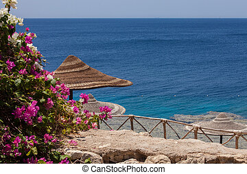 Sea, bougainvillea and beach umbrella Sharm el Sheikh Egypt...