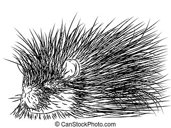 porcupine outline isolated on a white background