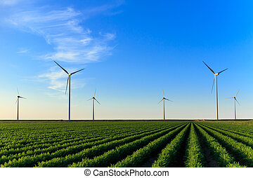 Windmills at field of crops - Windmills at sunset at a field...