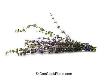Penniroyal or mentha pulegium herbs isolated on white -...
