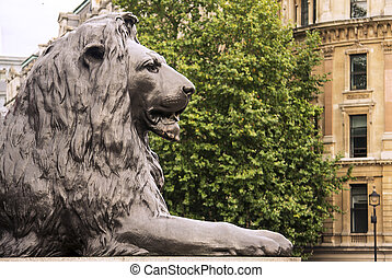 Trafalgar square - Lion in Trafalgar square, London, England...
