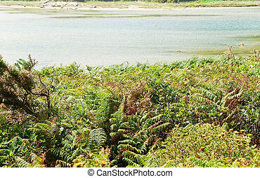 sea bay on Cies Islands in Atlantic, Spain - sea bay on Cies...