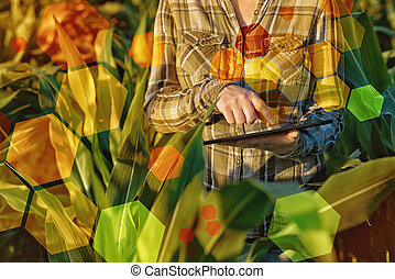 GMO science in corn field female agronomist using tablet...