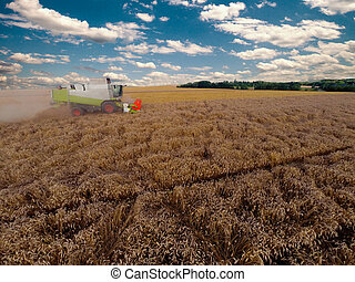 Combiner harvesting grains - combiner harvesting on grain...