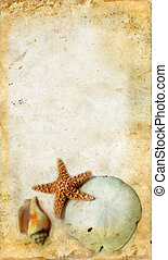 Starfish and Shells on a Grunge Background - Starfish and...