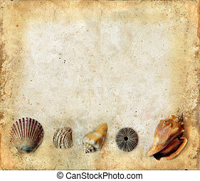 Sea Shells on Bottom of a Grunge Background - Variety of sea...