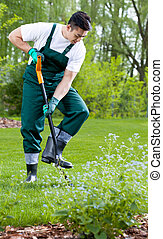 Gardener digging with shovel - Young asian gardener digging...