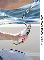 Man fishing mackerel from boat at sea - Fishing lures or...