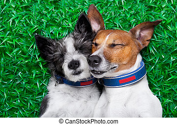 dogs in love - couple of dogs in love very close together...