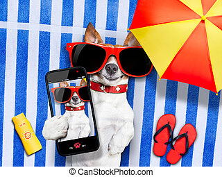 dog selfie from vacation - dog taking a selfie while lying...