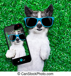 dog selfie - dog taking a selfie while lying on grass meadow...