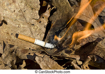 cigarette burning leaves - cigarette lighting leaves on fire