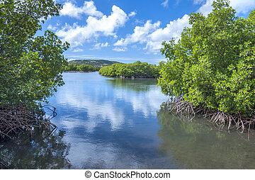 Mangrove lagoon - Mangrove islands in calm shallow Caribbean...